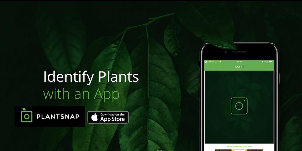 приложения справочники для телефона в походе Plantsnap